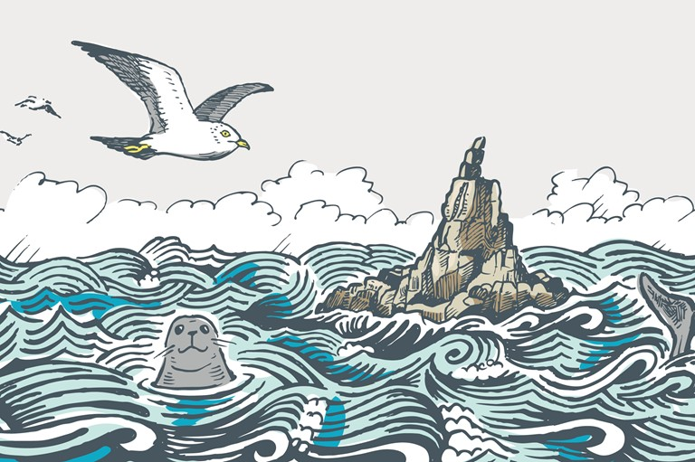 illustration, seal, seagull, cliffs, coast, water, sea, Mayon Lookout, animals, wildlife