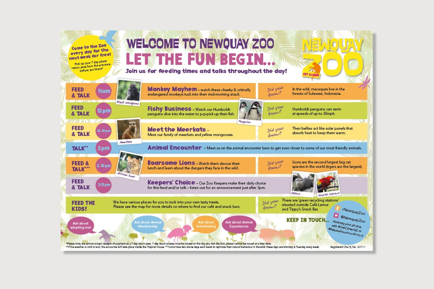 Newquay Zoo Feeding times flyer